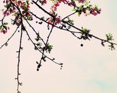 Blossom Cascade - Flower, Flowers, Floral, Branches, Sky, Nature, Light, Home Decor - 5x7 Fine Art Photography Print