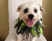 Fabulous, Fancy Ribbon Dog Collar