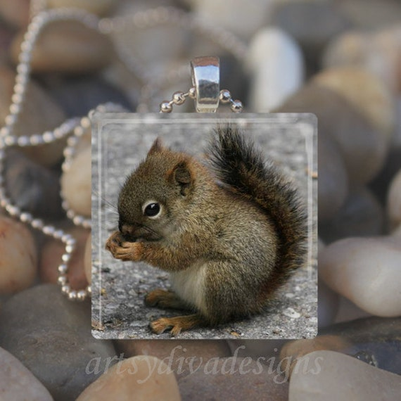 BABY SQUIRREL Forest Animal Glass Tile Pendant Necklace Keyring