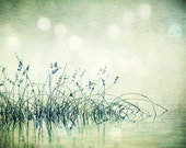 Photography - Peaceful Pond Water Reflection with Grasses & Bokeh Green Atmospheric Textured 8X10