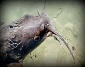 primordial  8X10  nature,pond,catfish,fish