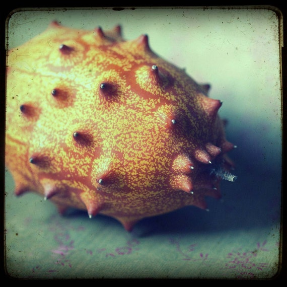 best defense. kiwano fruit, food art, kitchen decor, still life, yellow, orange, aqua, unusual