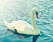 Swan Photograph Digital Download Photography white swan print nature aqua blue green nature wall art