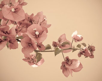 Digital Download Blossom Branch photograph Instant Download Fine Art Photography pastel flowers delicate floral print