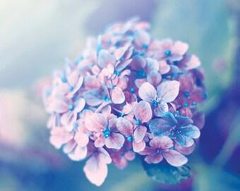 Hydrangea photograph Digital Download Fine Art Photography flower print soft wall art decor