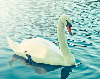 Swan Photograph Digital Download Photography white swan print nature aqua blue green nature wall art