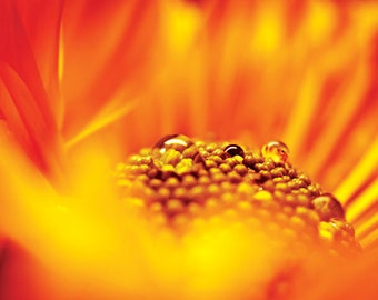 Orange flower photograph Digital Download tangerine orange picture  Flower Macro droplets Fine Art Photography  yellow red orange wall art