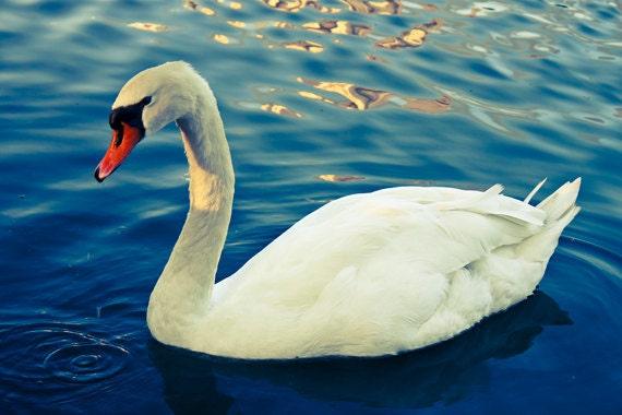 Swan Photograph Instant Download Fine Art Photography white swan print nature aqua blue green wall art decor