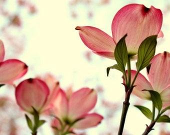 below // Overland Park, KS // pink // flowers // leaves // nature // outdoors // fine art print