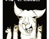 Sorry For All The Llamas