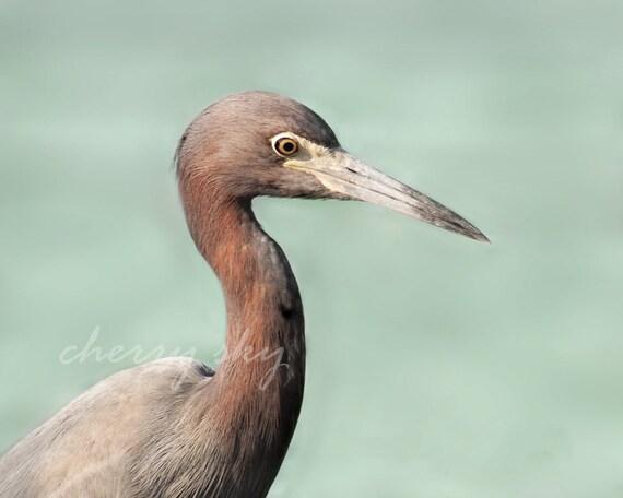Heron - Ocean Coast Coastal Shore Mint Seafoam Sea Bird Nautical Aqua Brown Sepia
