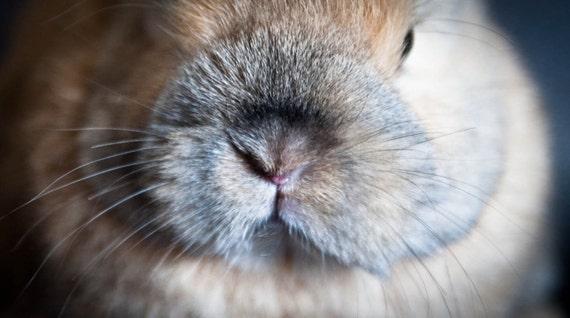 Bunny nose.