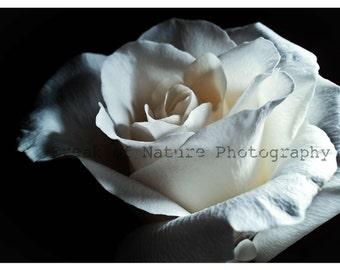 Fine Art Photography White Rose Macro Minimalist Black and White Monochrome - 5.5in x 8.5in