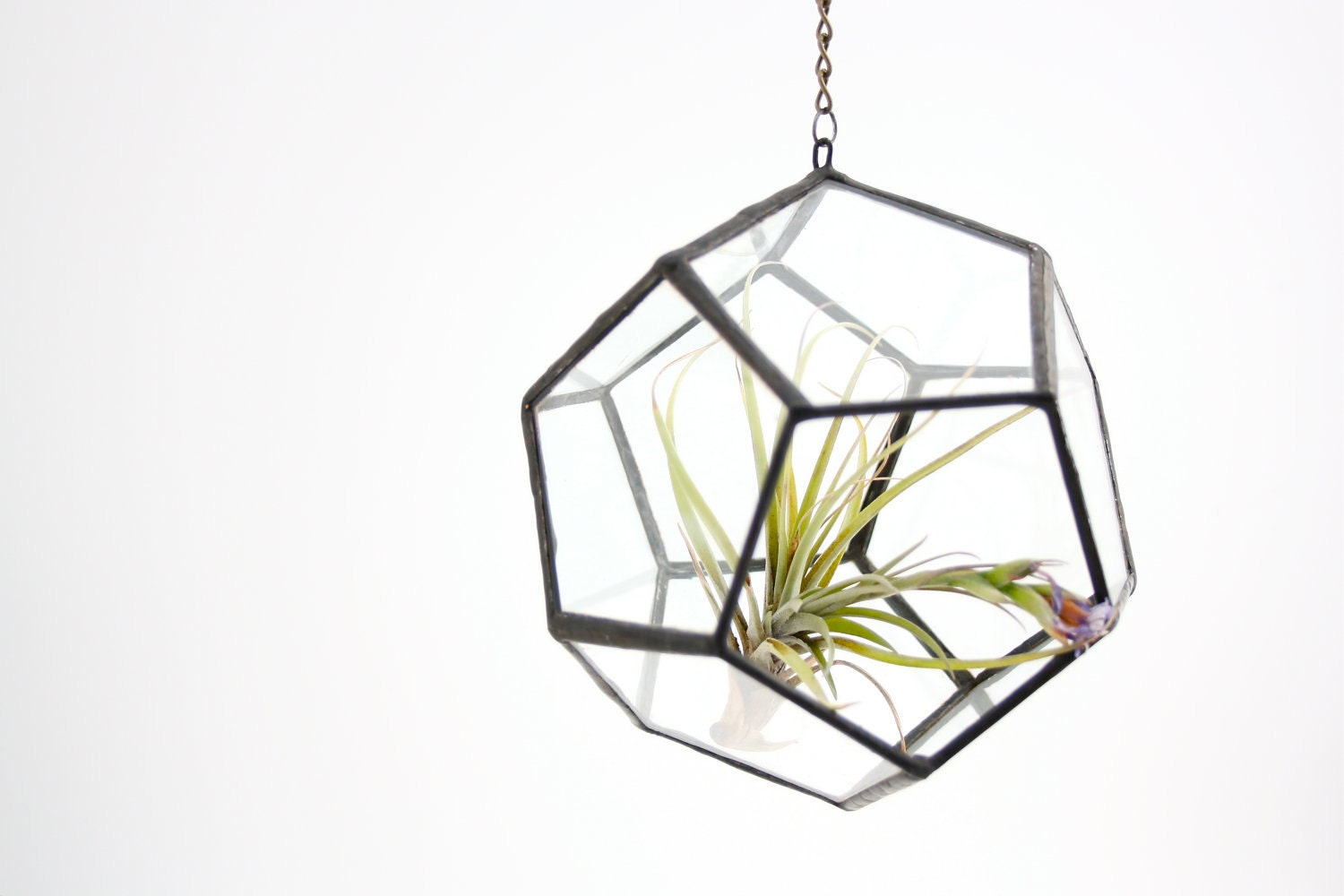 Small dodecahedron hanging geometric terrarium by megamyers