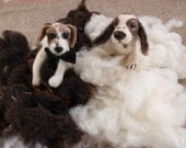 2 x 20g Bag Natural Hand Carded Needle Felt Felting Wool - Off-White and  Chocolate Brown 1.4 oz