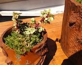 """5"""" Tree Trunk pot with Succulent Arrangement"""