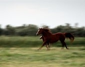 Mare and Foal: Evening Exercise