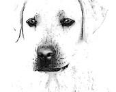 White English Labrador Retriever dog, photo, portrait