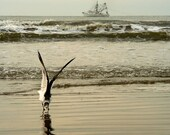 Seagull Bowing with Ship on Ocean in Kiawah Island, SC - Fine Art Photography Print