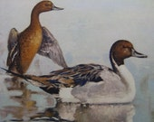 "Vintage Duck Art Print, ""Pintails at Dawn"" by Othello Michetti, Ducks Unlimited Sponsor Print - Home or Office Decor"