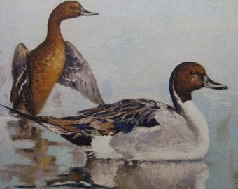 """Vintage Duck Art Print, """"Pintails at Dawn"""" by Othello Michetti, Ducks Unlimited Sponsor Print - Home or Office Decor"""