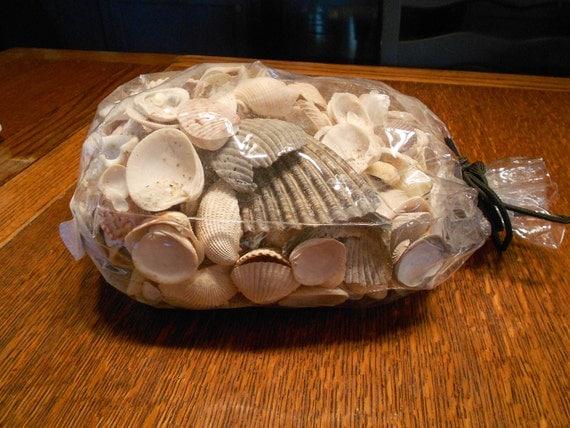 Big Bag of Sea Shells for Crafting