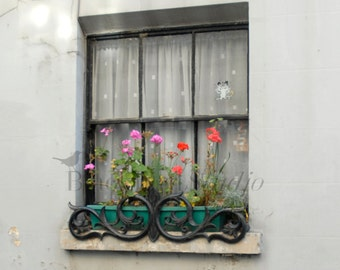 Bloomsbury Window Box, London  Fine Art Photograph limited edition print