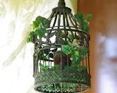 Small Ivy Birdcage Arrangement