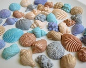 Edible Seashell Cupcake Toppers