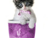 Kitten in a Cup, cat, fine art photography, home decor, pet lover, animals, 8x10