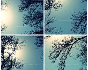 Tree Silhouette 4-5x5