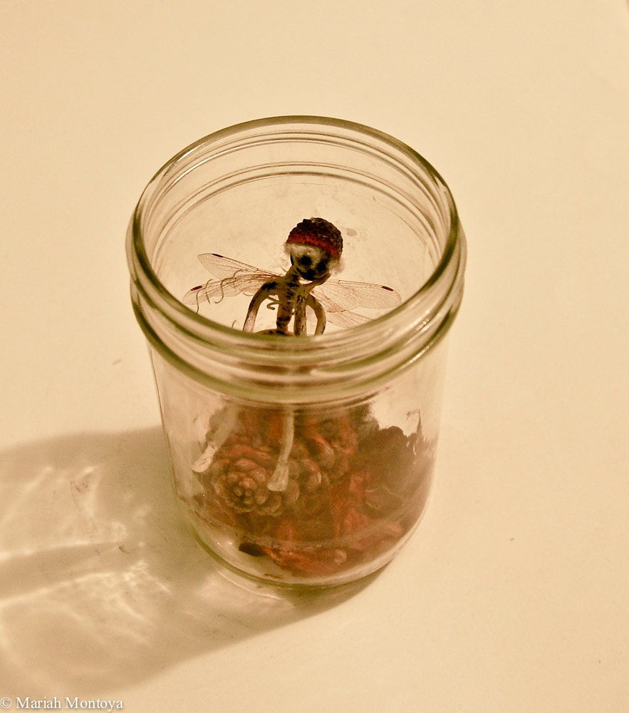 real fairies alive in a jar wwwimgkidcom the image