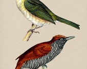 2 Beautiful Birds Digital Download Vintage Image Transfers For Pillows Clothing Tea Towels Tote Bags No. 166