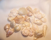 Gumpaste Seashells BUY more SAVE more - 50, 75, 100 counts available