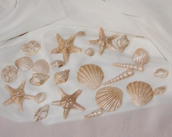 Gumpaste Sea Shells - 25 count