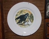 Turtle-dove Eaten Alive by Raven on Dinner Plate