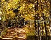 Greeting Card - Aspen Grove