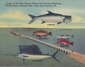 RESERVED FOR KIM 1940s Vintage Postcard: Some of the Fish Caught Along the Overseas Highway Perfect for Fathers Day