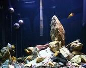 Fish Tank Decoration - Floating Aquarium Mine