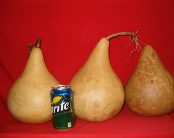3 -  7 inch  Martin Gourds ( Dried & Cleaned)