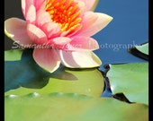 Pink waterlily and dragonfly digital photo print pack - vertical - 5x7