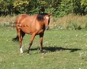 Horse, Animals, Horse in the field high definition photograph