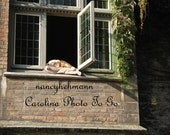 Dog sleeping in window in Bruges Belgium photograph