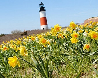 Daffodils and Lighthouses, 8 x 10