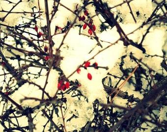 Winter Berries, 5 x 7