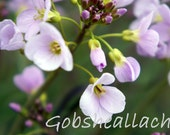 Cuckooflower in the Spring, Fine Art Photography