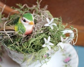 Colorful Bird Nested in A Fine China Tea Cup
