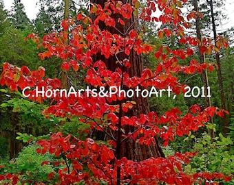Christmas photo card, Red Dogwood photo card, Autumn photo card,