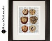 Sand dollars Print 8x10 inch on a Vintage Upcycled Dictionary page