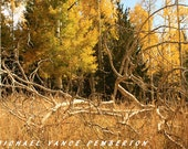 Winter Sale 8x10 Fine Art Print - Aspen In The Fall Print A Must Have For Your Home Or Office.